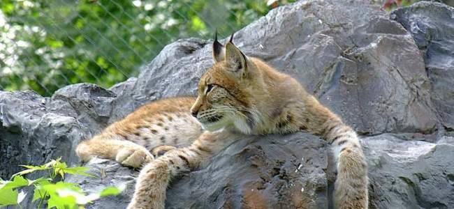 Zoo Oradea